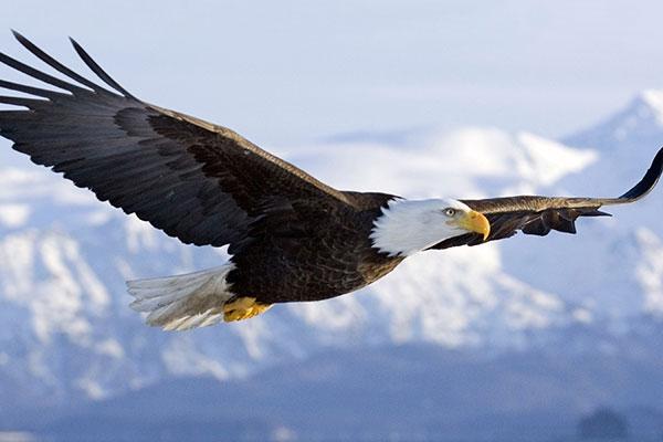Đôi cánh để bay lên. Suy niệm Tin mừng Chúa nhật 30